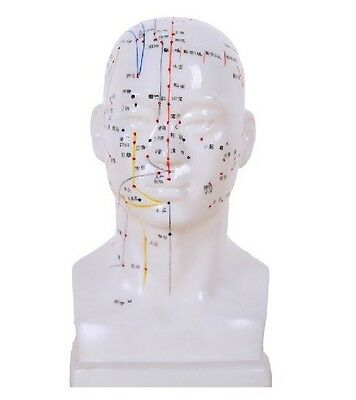 M06 head model for the acupuncture point  collaterals