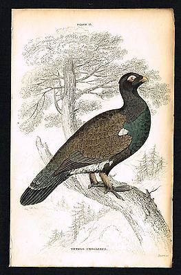 WOOD GROUSE, GAME BIRDS - 1834 Antique Hand-Colored Engraving Print