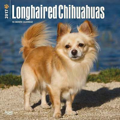 Longhaired Chihuahuas wall calendar 2017. new & wrapped. Full colour