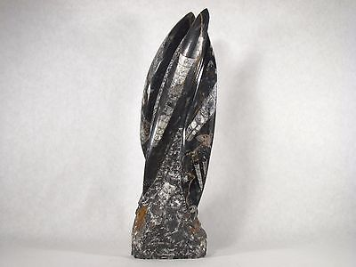 YB  Orthoceras Statue! Great Gift for Fossil Lovers! 7lbs 13oz {Y910AB}