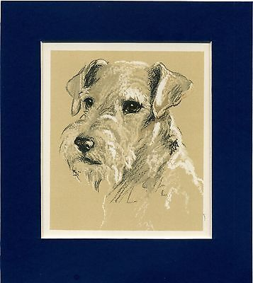 Lucy Dawson ~ Wire Haired Fox Terrier ~ Colour Print Genuine Vintage 1939