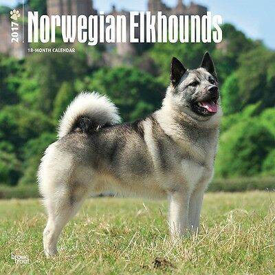 Norwegian Elkhound wall calendar 2017. new & wrapped. Full colour