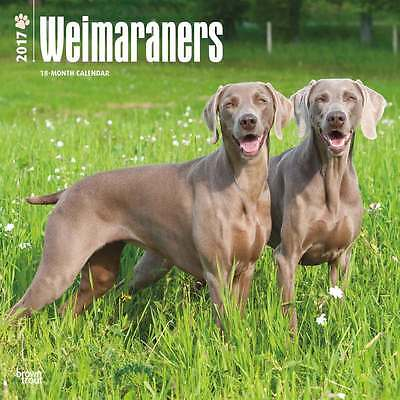 Weimaraners wall calendar 2017. new & wrapped. Full colour