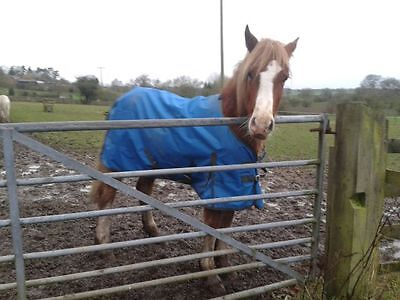 5 ft Cosy Pony Turnout Rug Light weight Blue