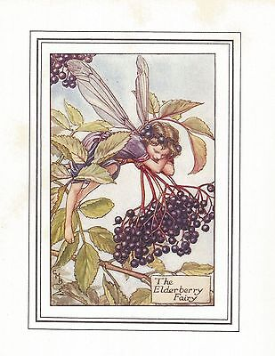 Flower Fairies Vintage Print : The Elderberry Fairy