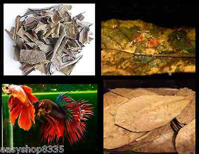 Catappa Indian Almond leaves Ketapang for shrimp, fighting fish,betta,Catfishes