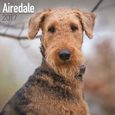 AIREDALE TERRIER CALENDARIO CANI 2017 Avonside NUOVO
