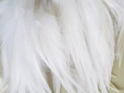 10 White Beautiful Rooster Feathers 5-7 Inches UK Stock