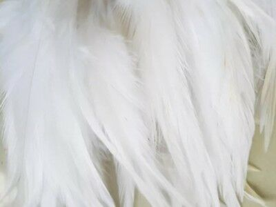 10 White Beautiful Rooster Feathers 3-5 Inches UK Stock