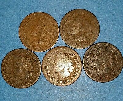 Set of 5 1883 to 1887 Indian Head Cents  ID #52B
