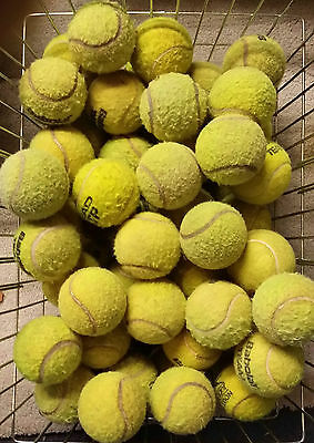 50 Used Tennis Balls For Dogs  Dog Ball / Toy  - Lowest Price On Ebay !