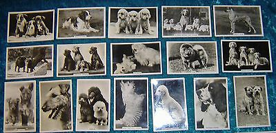 Senior Service  33 of 48 cigarette cards Dogs 1939