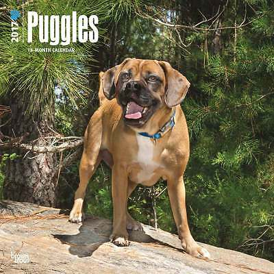 Puggle  wall calendar 2017. new & wrapped. Full colour