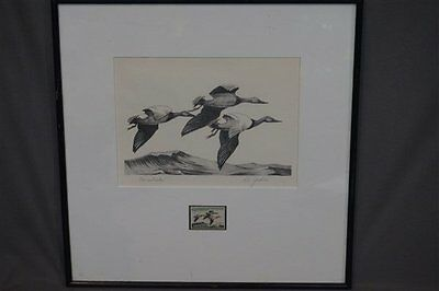 "RW32 1965 Federal Duck Stamp Print,  Artist Ron Jenkins ""Canvasbacks"