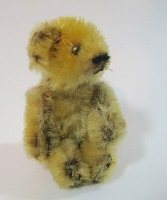 Ancien Petit Ours Antique Teddy Bear Farnell Steiff Vintage