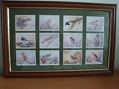 Framed Cards Birds of Britain set of 12 Imperial Tobacco 1994