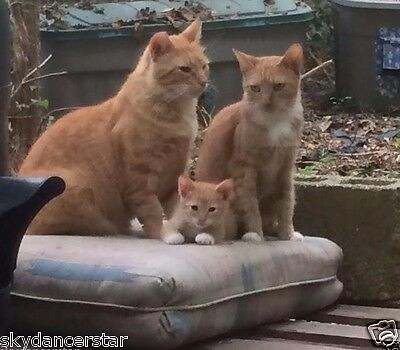 Feed Mom Cat And Kitten Family 100% Donation To Cat Rescue Receive Color Photo