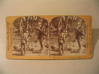 Stereoview Photo cdii Japanese Coolies Carrying Limestone to Kilns Japan