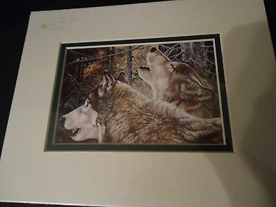 "New Canadian Wolf Print By Artist Andrew Kiss  8"" x 10"""