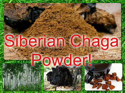 Siberian Chaga Dried powder 0,5-12 Lbs from Mountains Altai! Harvest 2017! Best!