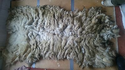 1.1kg Raw Sheeps Fleece Texel X Welsh Spinning Weaving Stuffing Insulation 99A