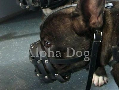 """Light leather Dog Muzzle for French Bulldog """"Frenchies""""Length-4,5cm Circuit-26cm"""
