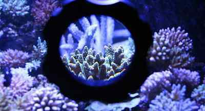 "4"" Aquarium Magnifying Glass W/ Magnetic Glass Cleaner - View Fish/coral/plant"