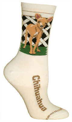CHIHUAHUA Socks - natural background, American made, 75% cotton