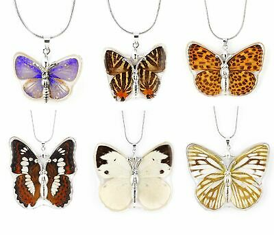 Real Insect Butterfly Wings Necklace Pendant Charm Jewelry Butterflies