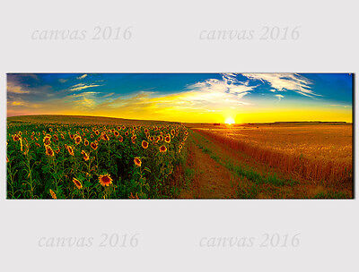595 X LARGE PANORAMA CANVAS FIELD SUNFLOWER SUNSET SUNRISE WALL Print picture