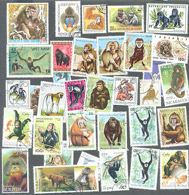 Monkeys-Apes-few Gorillas 50 all different collection