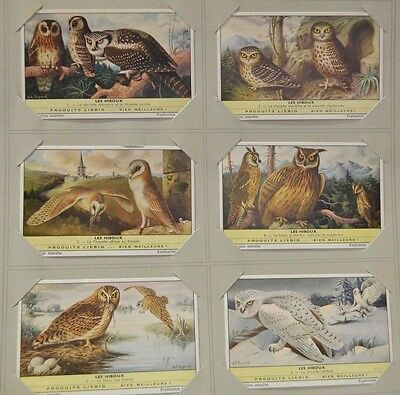Liebig french Trade Card S1761 the Owls