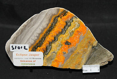Bumble Bee  Polished Slice/slab, Indonesia (S1012)