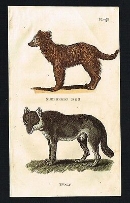 WOLF & SHEPHERDS DOG - 1811 Antique Hand-Colored Print, Scarce