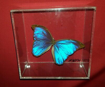 Signed Blue Morpho Didius Real Butterfly Insect Taxidermy Lucite Display Box Art