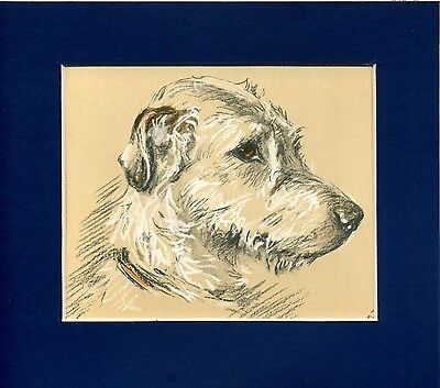 Lucy Dawson ~ Irish Wolfhound ~ Colour Print Genuine Vintage 1939