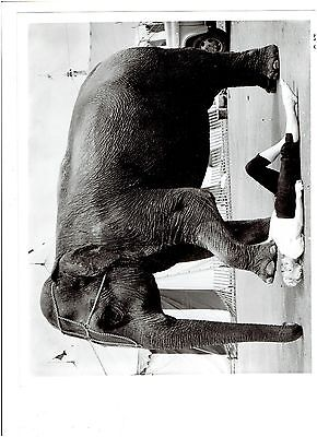 Vintage Circus Black and White Photograph - Elephant Standing Over Woman