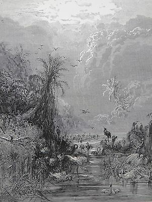 Milton's Paradise by Gustave Dore Antique Print C. 1870 Creation of Birds (200)