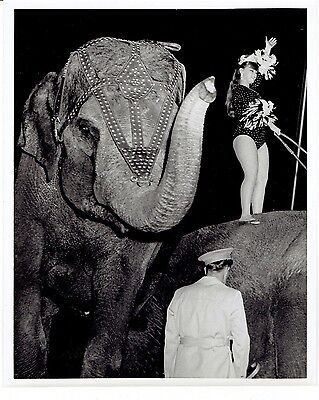 Vintage Circus Black and White Photograph - 1 Elephants with Circus Performer
