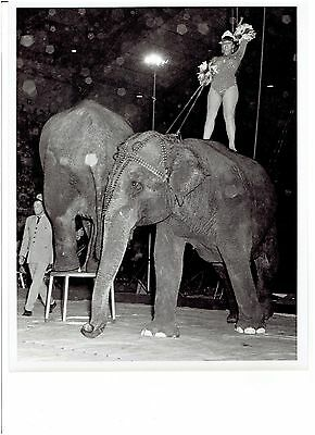 Vintage Circus Black and White Photograph - Beautiful Performer Riding Elephant