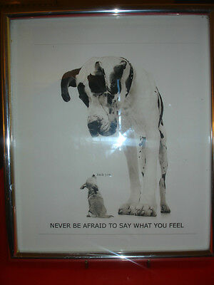 Great Dane And Chichuahua Framed Picture. (Contains Strong Language!)