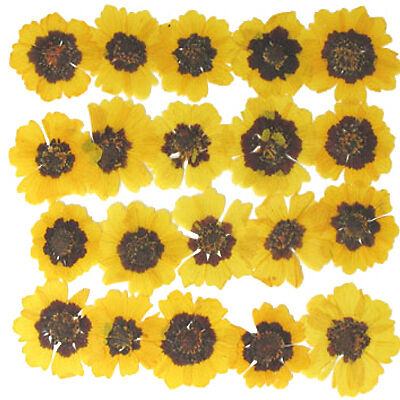 pressed flowers, 20pcs yellow multicule, card making art craft materials