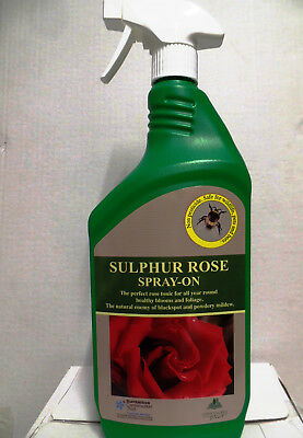 Sulphur Rose blackspot fungal disease yellow leaves plant tonic spray all year