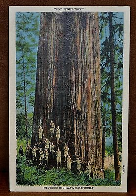 Boy Scout Tree Redwood Highway Crescent City, California Linen Post Card