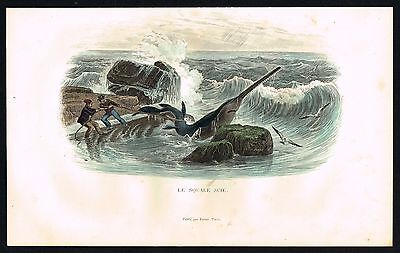 1839 Antique Print - Huge Saw-Shark pulled on shore by fishermen, Lacepede