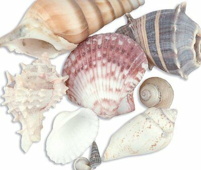 Sea Shell Mixes 10/Pkg-Natural