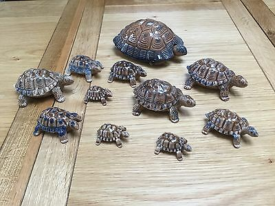 Collection of wade Tortoises
