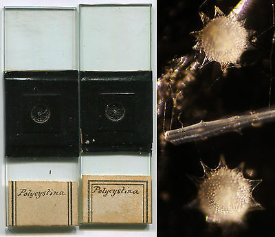 Polycystina Microscope Slides, Selected and Arranged Specimens, ca. 1870
