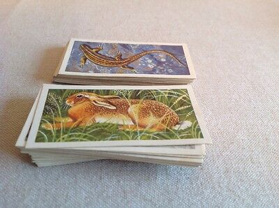 Vintage Brook Bond Tea Cards British Wild Life Set 50