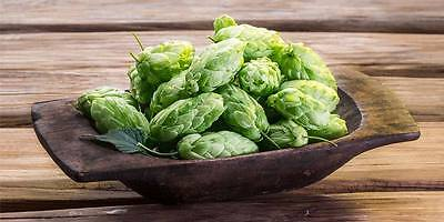 Variety pack Hop Seeds Grow your own hops Home Brew 25 Seeds 4 varietals